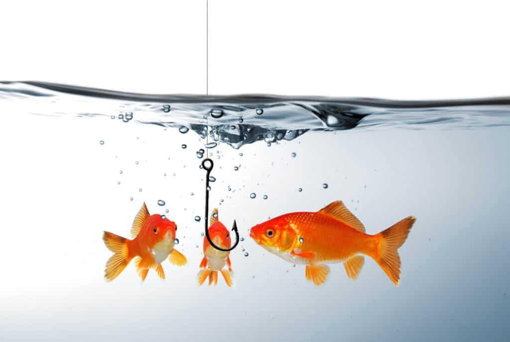 Fische am Angelhaken mit Content Marketing: neue Kunden fangen