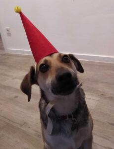 CMS Bürohund Michi mit Weihnachtshut